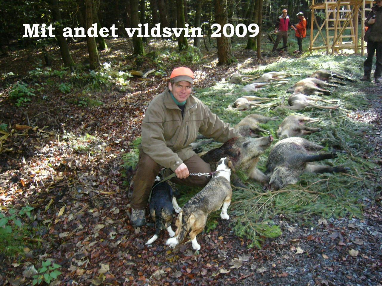 vildsvin09